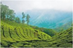 Munnar Expeditions, North and South India Tours,Indian Holiday Options, Vacation